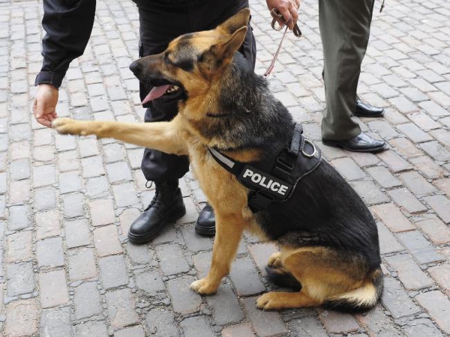 caine politist