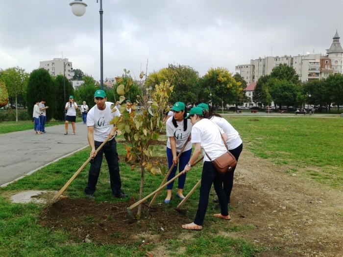 Campania de plantare a teilor în oraș va continua și în acest an