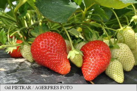 căpșuni pentru dureri articulare